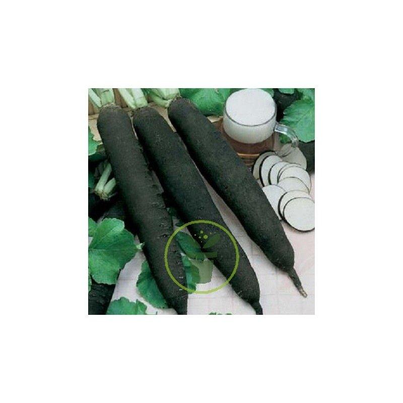 radis noir gros long d 39 hiver 4 grammes 1 17 chez graines. Black Bedroom Furniture Sets. Home Design Ideas