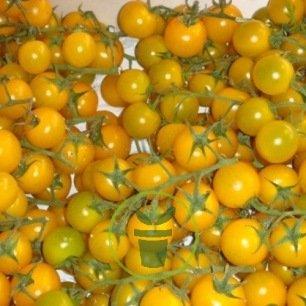 Tomate cerise jaune 60 graines