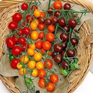 Tomate cerise en mélange 60 graines