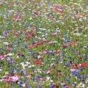 Mélange de fleurs protectrices du jardin