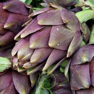 Artichaut Violet de Provence - graines