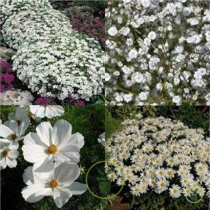 Mélange de fleurs Blancheur d'été