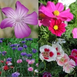Mélange de fleurs La Vie en Rose