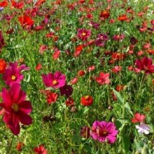 Mélange de fleurs Passion Pourpre