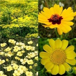 Mélange de fleurs Yellow Sunschine
