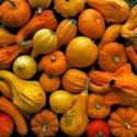 Coloquinte 25 graines - 2 variétés au choix