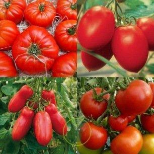 Tomates classiques et incontournables - 6 variétés au choix + 1 pack