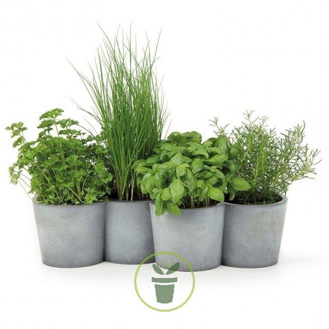 Plantes aromatiques en mélange 100 graines