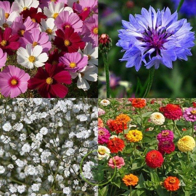 Mélange de fleurs pour prairie fleurie bouquet et massif