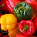 Poivron 100 graines - 3 variétés au choix