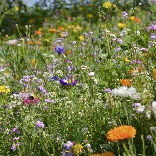 Mélange de fleurs bio pour abeilles