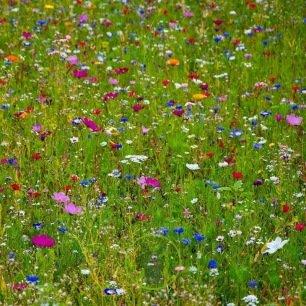 Mélange de fleurs sauvages BIO 2 grammes