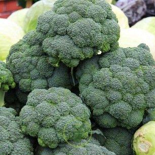 Chou brocoli Calabrese BIO