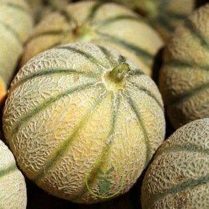 Melon sucré Canteloupe Charentais BIO