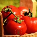 Tomate Ace 55 VF BIO 0,5 gramme