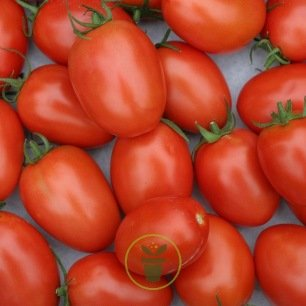 Tomate Roma BIO 0,25 gramme