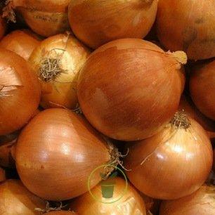 Oignon à planter - 2 variétés au choix