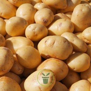 Pomme de terre - 4 variétés au choix
