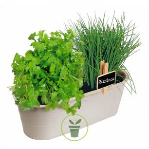 Jardin de plantes Aromatiques Biologiques - Kit complet prêt à pousser