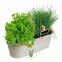 Jardin de plantes Aromatiques Biologiques - Kit complet prêt à pousser  - Ciboulette-Coriandre