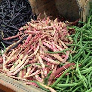 haricot nain à écosser Borlotto rosso 15 grammes