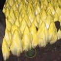 Chicorée de Bruxelles Witloof - chicon- endive 2 grammes