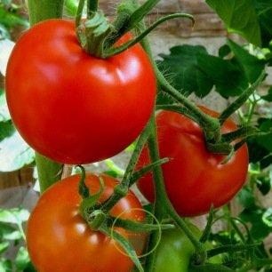 Tomates Saint-Pierre