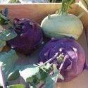 Chou rave Delicatess Violet ou Blanc 300 graines