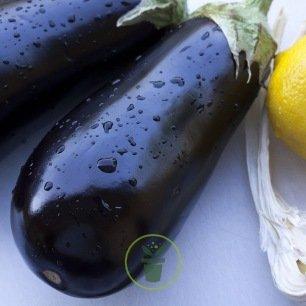 Aubergine de Barbantane (Violette Lunga)