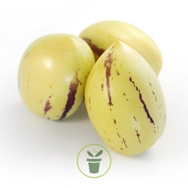 Poire - melon ou Pépino 15 graines