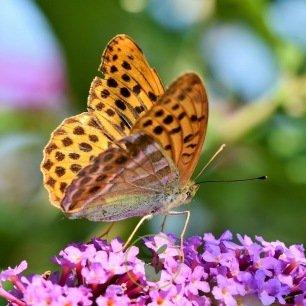 Mélange de fleurs pour papillons 2 grammes