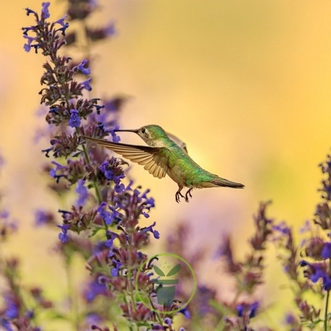 Mélange de fleurs pour oiseaux 2 grammes de graines