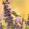 Mélange de fleurs pour oiseaux 2 grammes