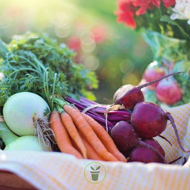 8 Variétés de graines de légumes pour votre jardin potager facile