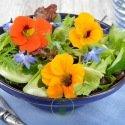 Fleurs comestibles – pack de 5 variétés