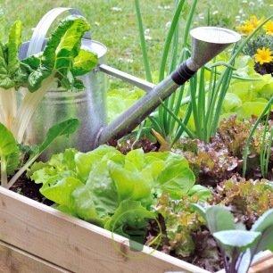 Graines de légumes pour potager en carré ou sur balcon – Pack de 8 variétés