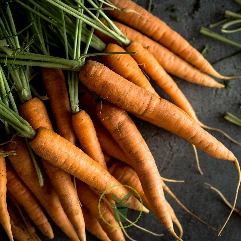 Daucus carota ♫ Graines ♫ Plte Potagère Gustative ♫ CAROTTE /'Hâtive de Nantes/'