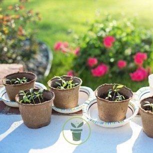 Légumes à semer au printemps - pack de 5 variétés