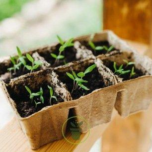 Pots biodégradables carré 5 cm/ 36 pièces (Jiffy pots)