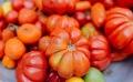 Le semis des tomates : comment débuter leur culture?