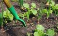 Jardin en juillet : travaux, semis et récoltes