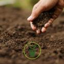 Comment nourrir la terre de son potager ?