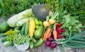 Les travaux du jardin et du potager à prévoir en août