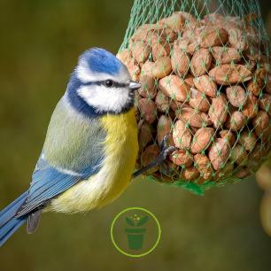 Filet d'arachides pour oiseaux (2 x 90 g)