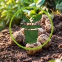 Quels sont les travaux et semis à réaliser au jardin et au potager en septembre ?