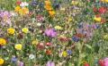 Comment réaliser une prairie fleurie ?