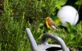 Les 6 plantes qui nourrissent les oiseaux