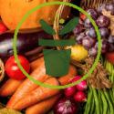 Le potager en octobre : travaux et semis à réaliser