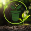 Qu'est-ce que la faculté germinative des graines ?