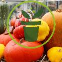 Quelles cucurbitacées sont idéales pour la décoration d'automne et d'hiver ?